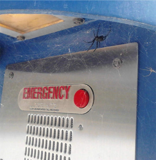 funny-spider-web-emergency-button