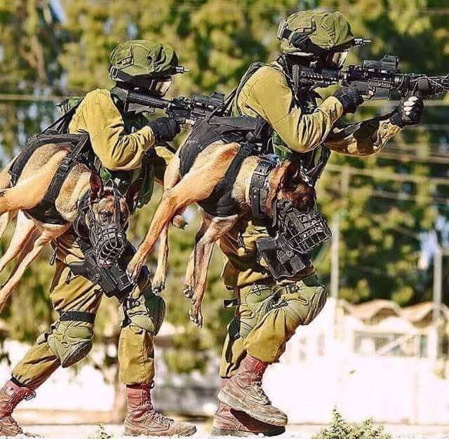 holstered attack dog.