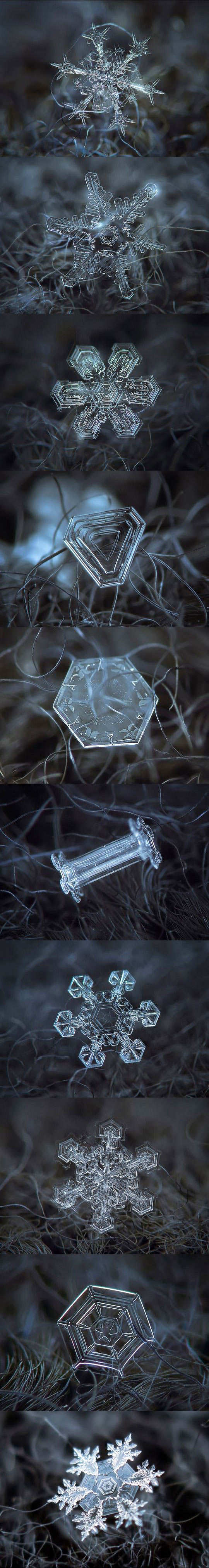 Micro-Photography Of Tiny Snowflakes