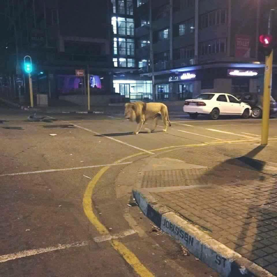Downtown Johannesburg
