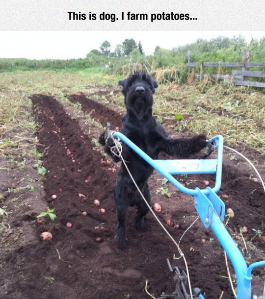 Just A Farmer At Work