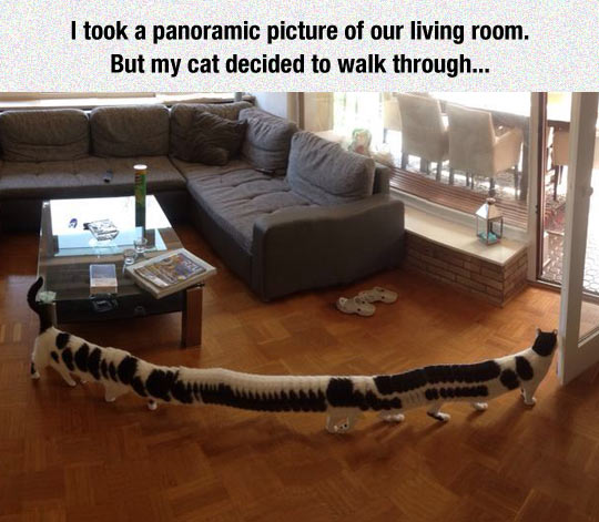 Just A Panoramic Picture Of A Cat