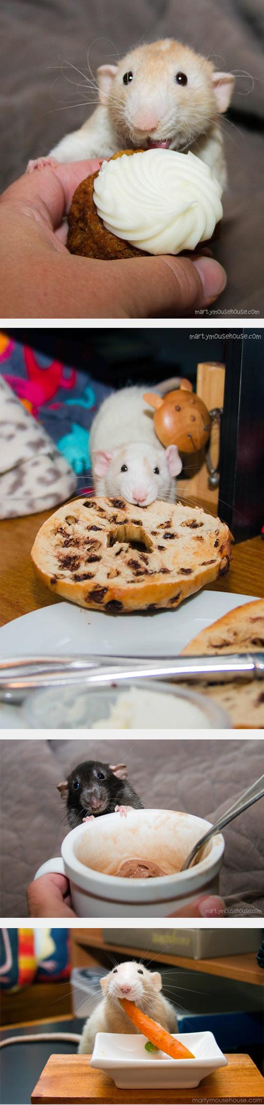 Rats' Favorite Dessert