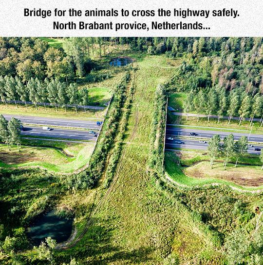 bridge-animals-cross-safely