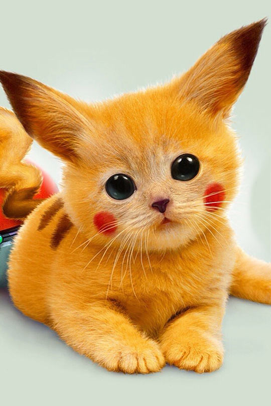 cool-Pikachu-real-cat-face