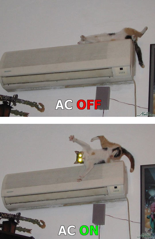 cool-cat-air-conditioner-off-on