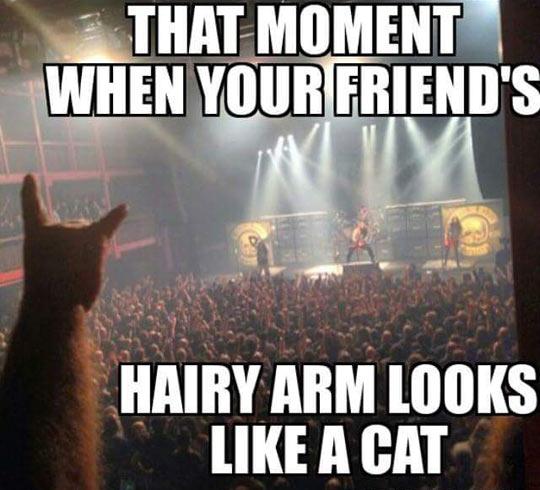 cool-cat-hand-metal-gig