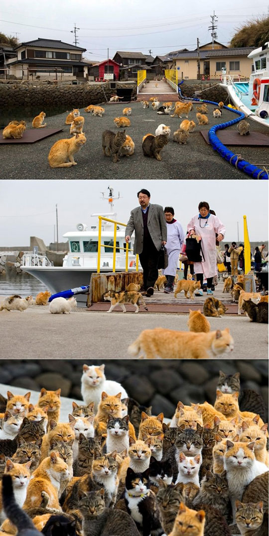 cool-cat-island-Japan-boat