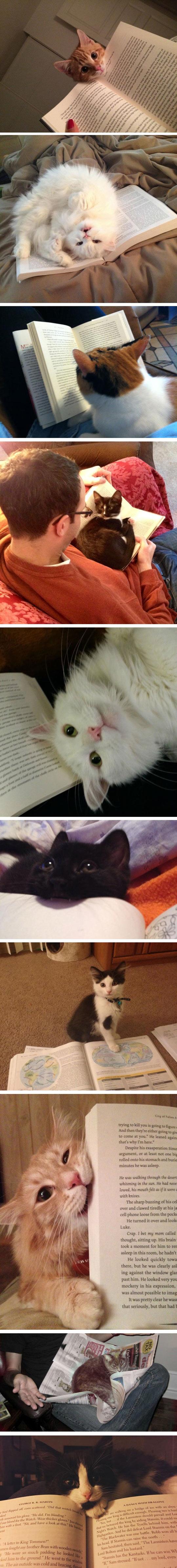 Cats Who Won