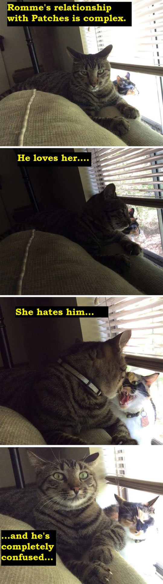 cool-cats-confusing-relationship-love