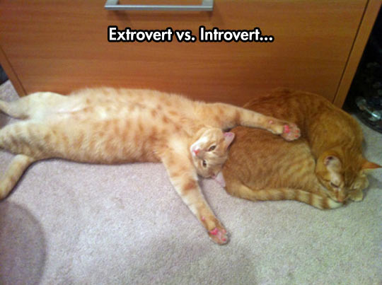 cool-cats-introvert-extrovert-different