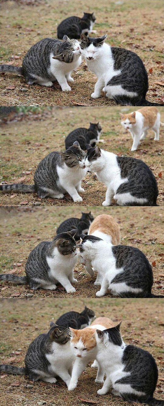 cool-cats-kissing-envy-friend