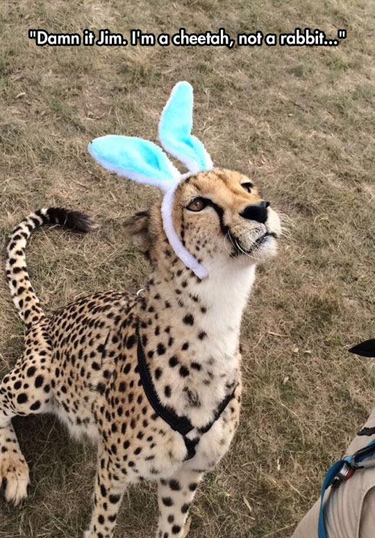 cool-cheetah-bunny-ears-costume