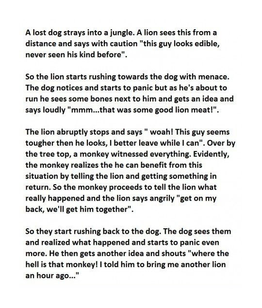 Now That Is One Smart Dog