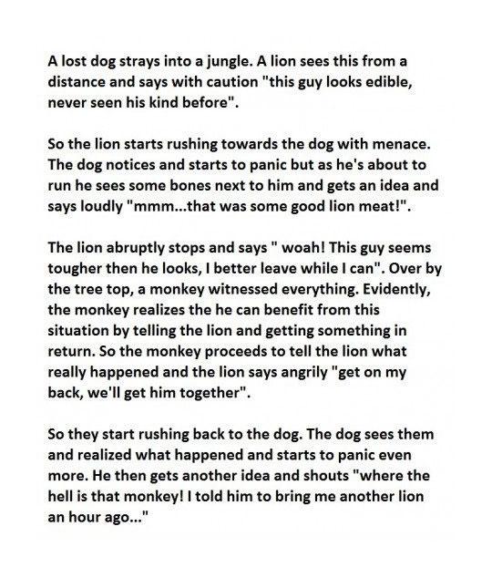 cool-dog-jungle-story-monkey