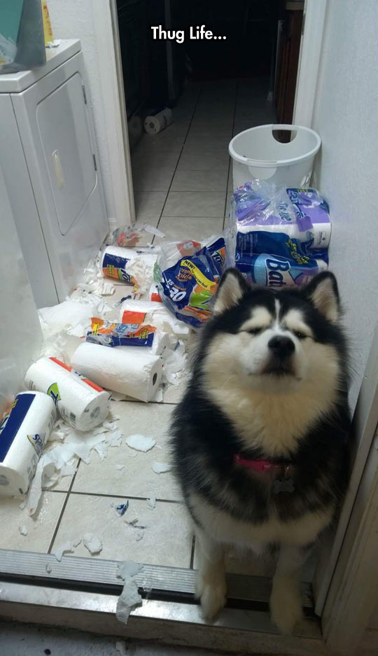 cool-dog-mess-kitchen-paper-destroyed