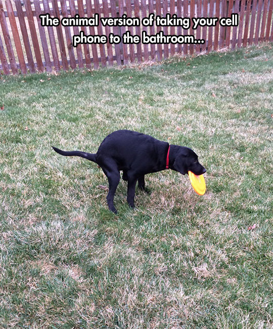cool-dog-pooping-backyard-Frisbee