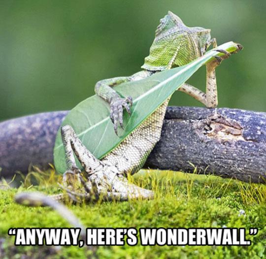 cool-gecko-playing-guitar-leaf