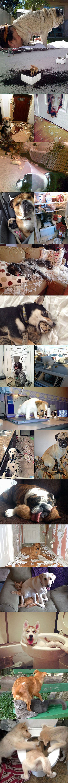 cool-jerk-dogs-pets-crazy