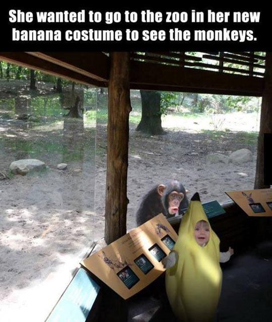 cool-kid-banana-costume-monkey-zoo