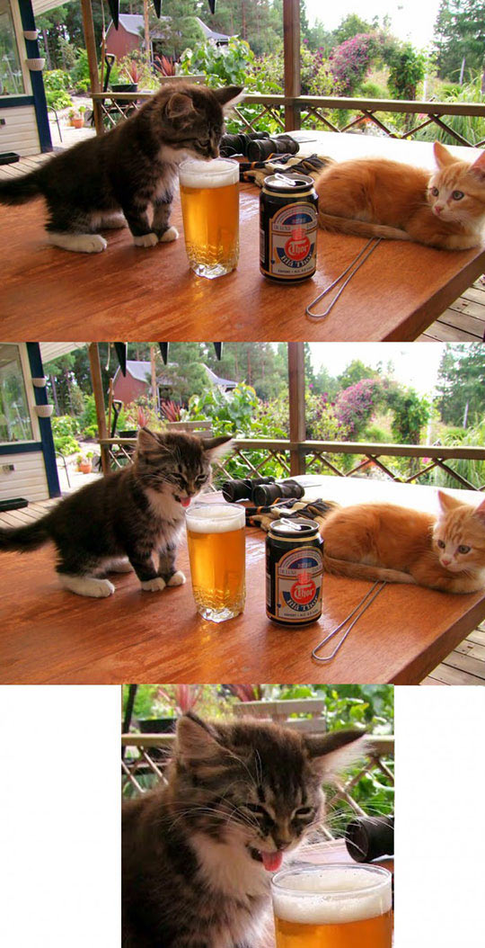 Kitten Tastes Beer For The First Time