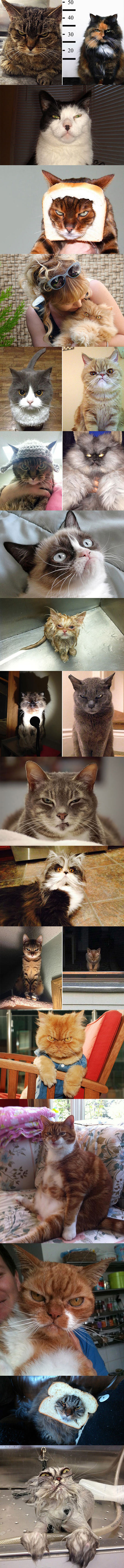 Some Cats Whose Death Stare Will Devour Your Soul