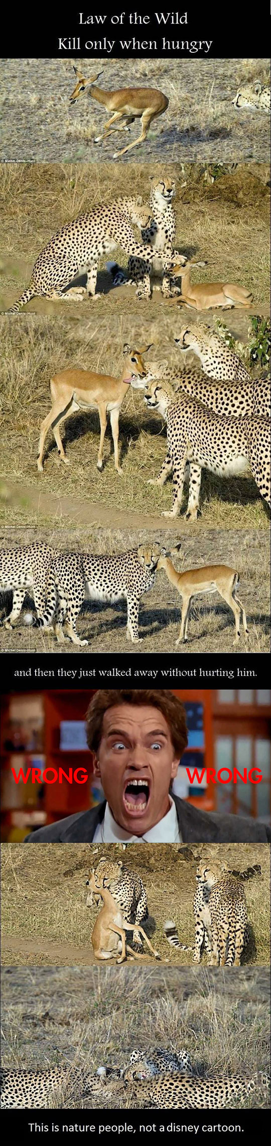 cool-nature-deer-killing-hunger