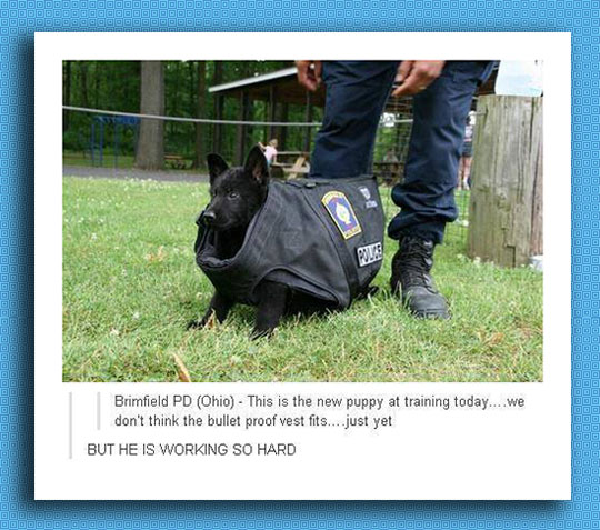 Puppy In A Bullet Proof Vest