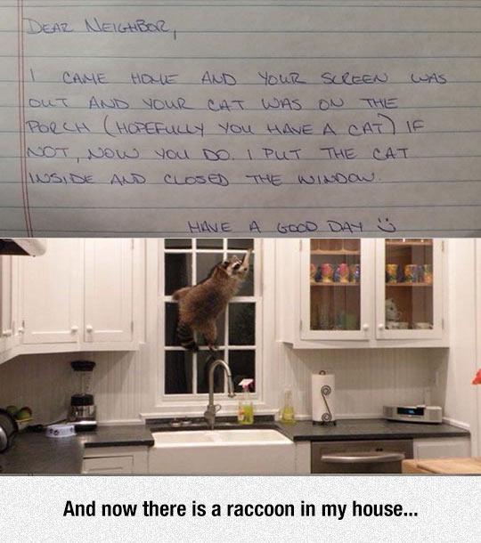 cool-raccoon-note-neighbor-kitchen
