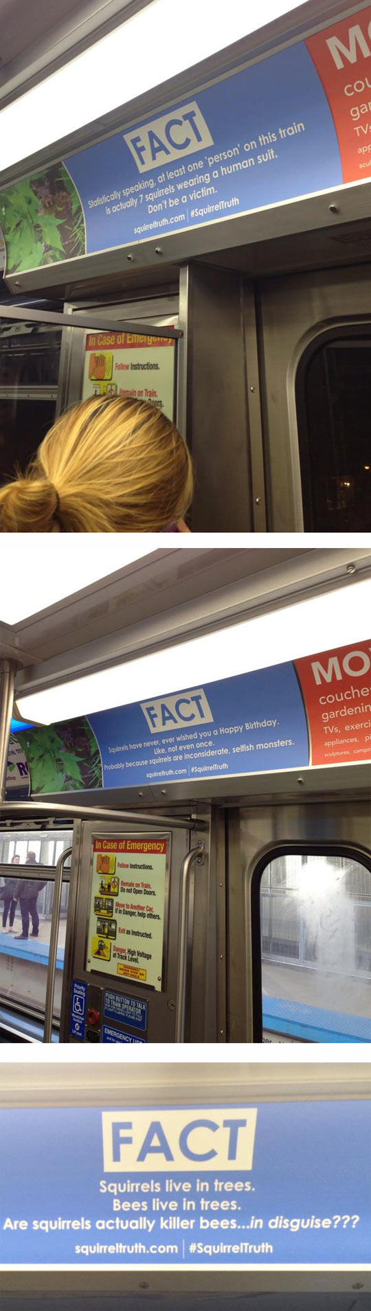 Random Squirrel Facts On The Subway