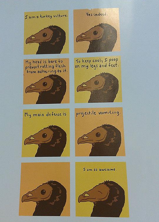 cool-turkey-vulture-defense-vomit