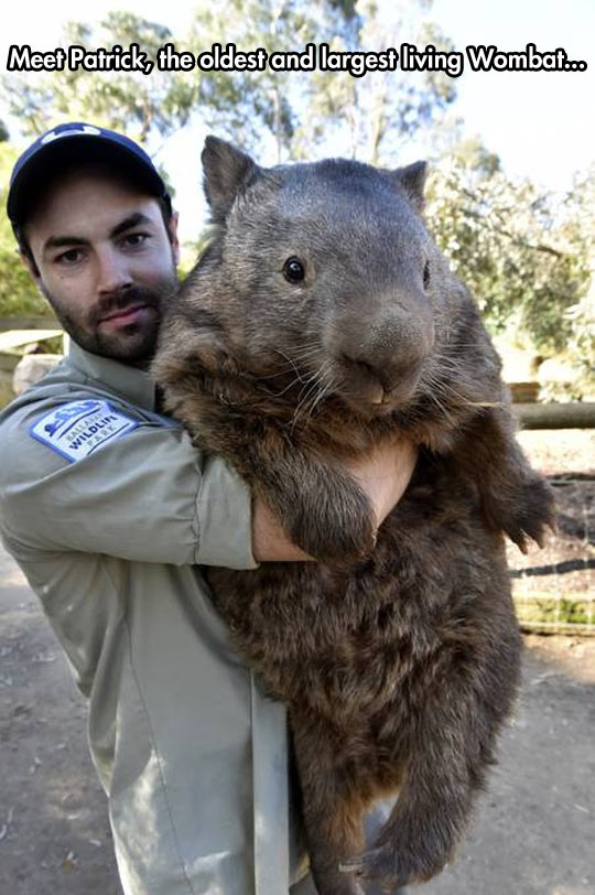 cool-wombat-oldest-largest-zookeeper