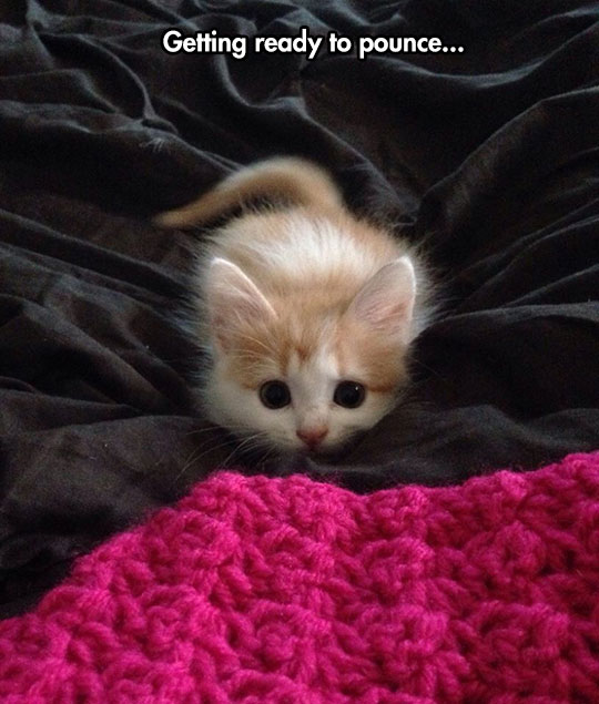 Such A Cute Little Thing
