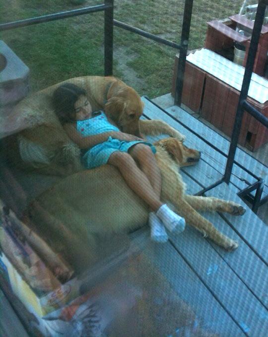 cute-dogs-sleeping-floor