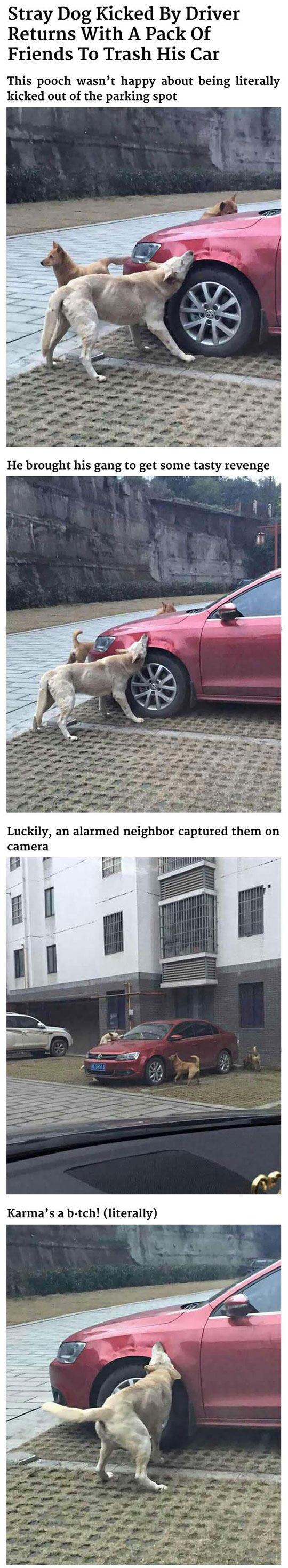 dog-payback-biting-car-kick