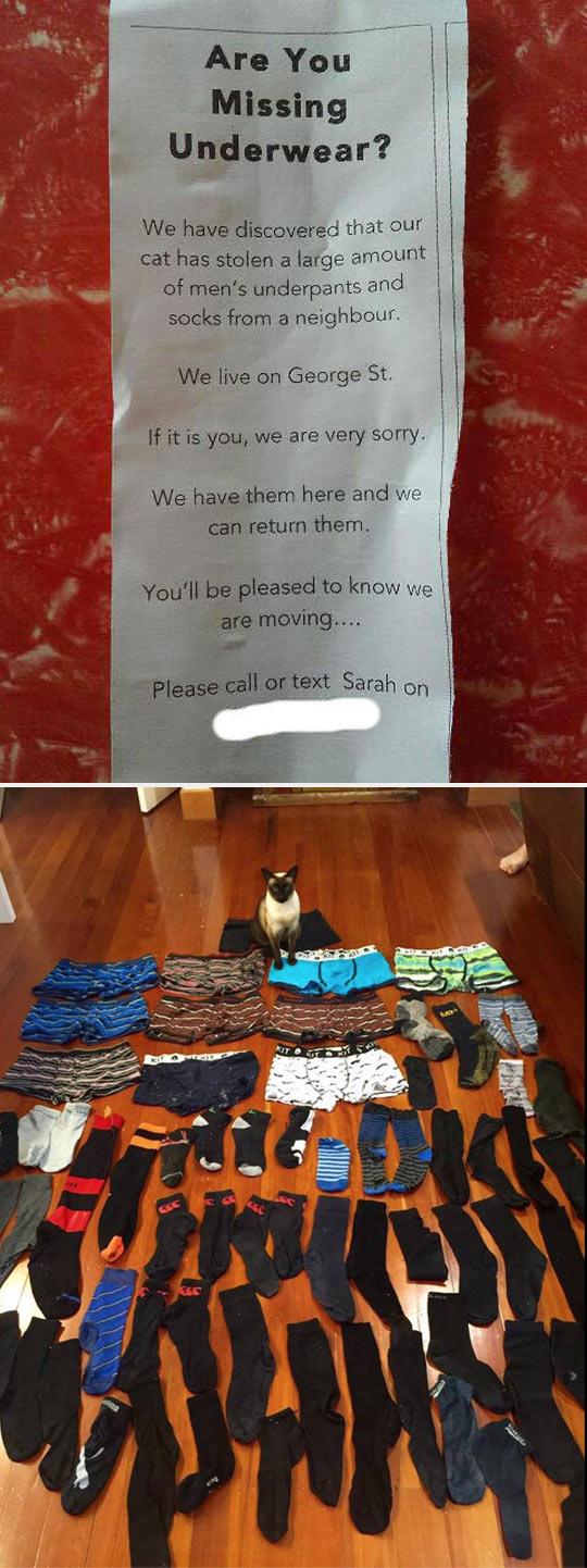 funny-cat-thief-clothes