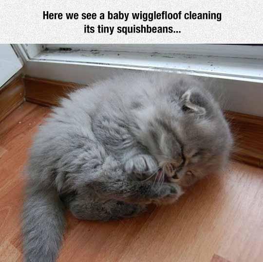 Baby WiggleFloof