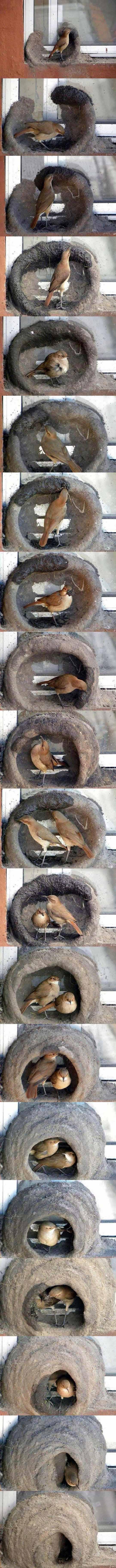 Birds Building A Nest.