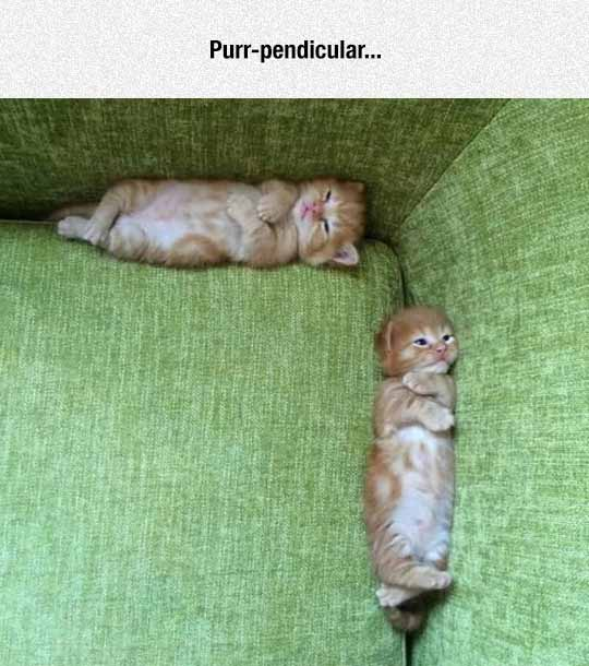 Cat Geometry
