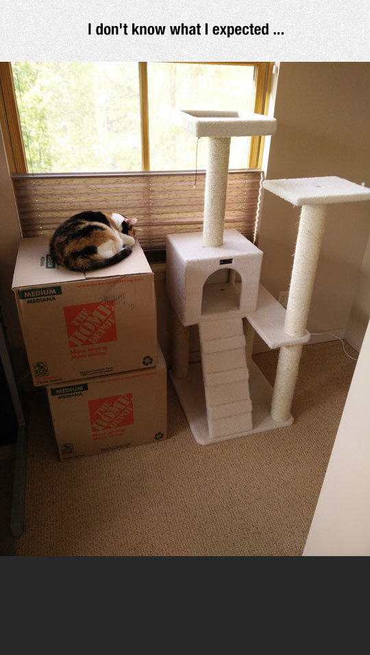 Cats Don't Care About Expensive Toys