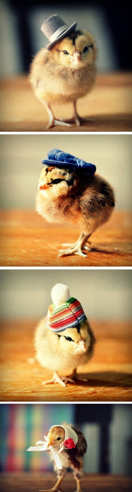 Chicks With Fabulous Hats