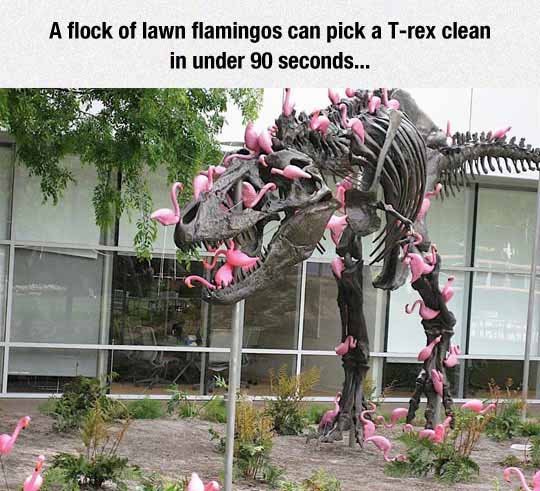 Fact About Flamingos