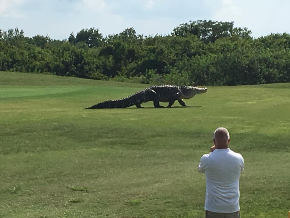 Golf course hazard in Florida