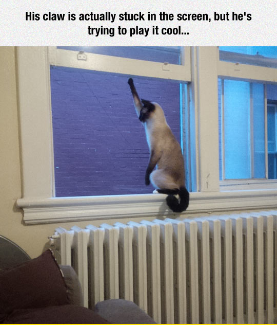 Just Play It Cool