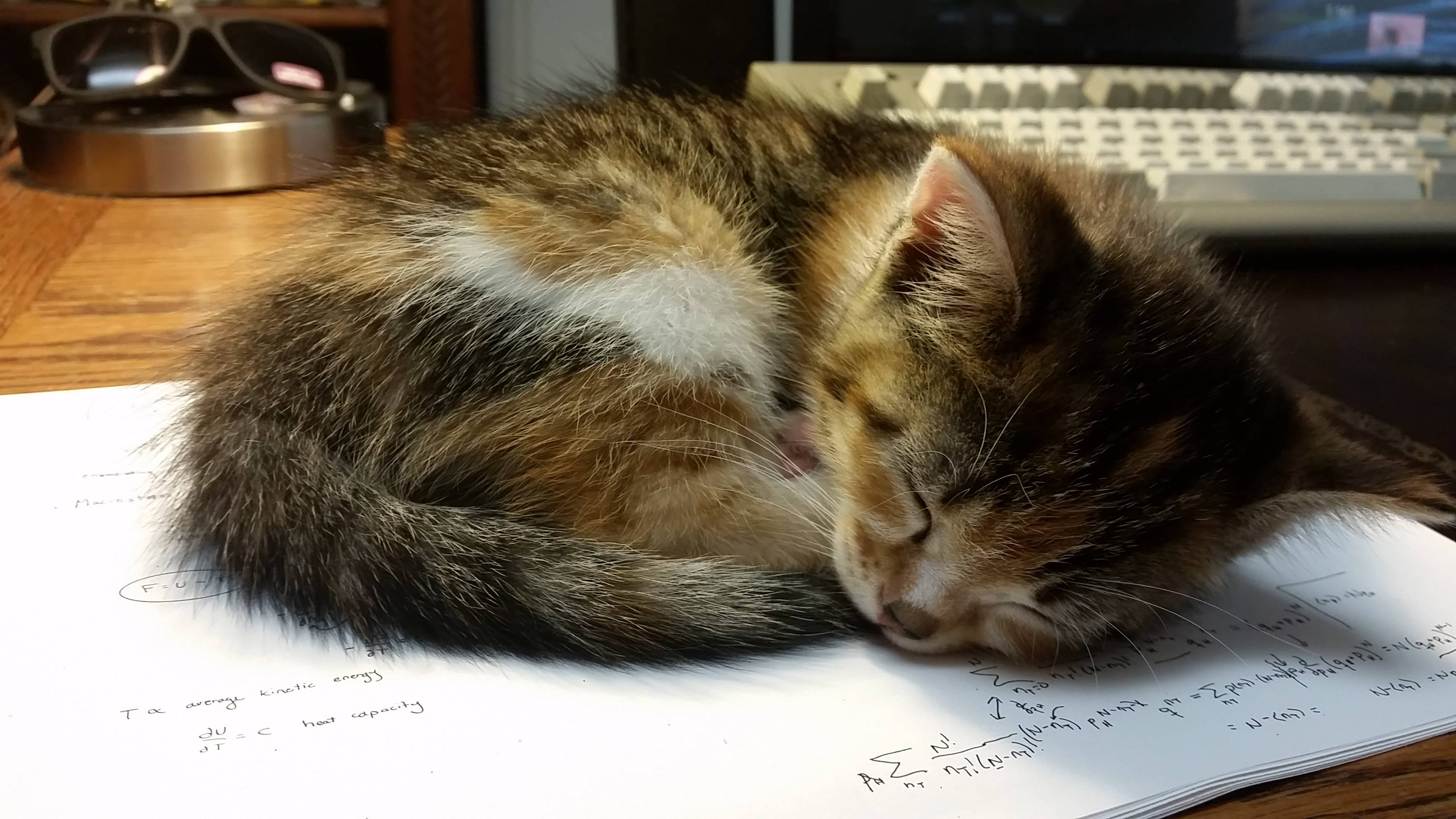 New paperweight