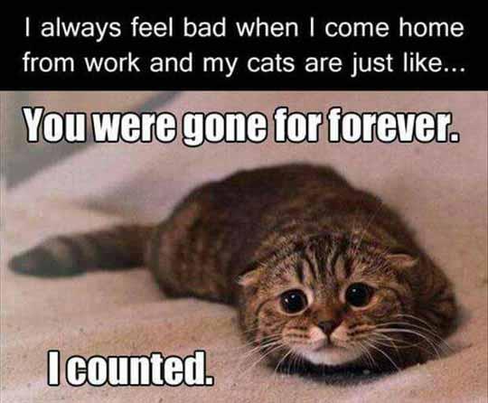 So Sad, So Cute