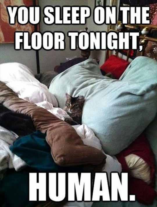 Sorry, Bed Is Taken