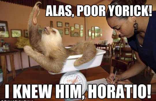 Such A Dramatic Sloth