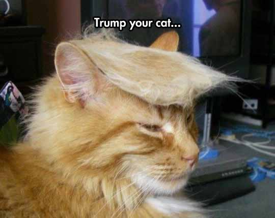 This Cat Before Donald