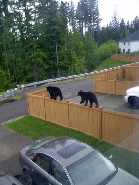 Weird cats in neighborhood